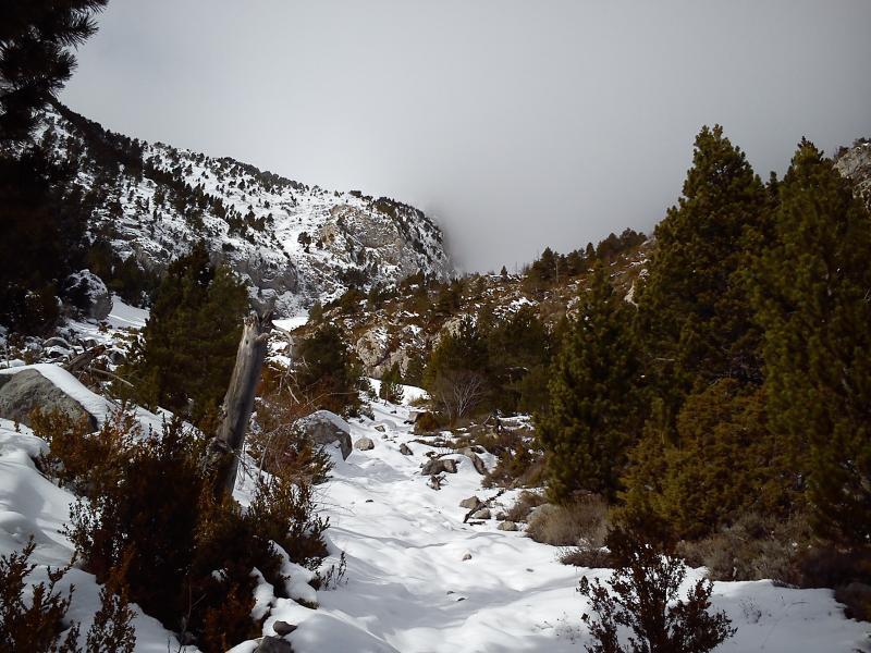 Final del bosque y primero metros de la Tartera